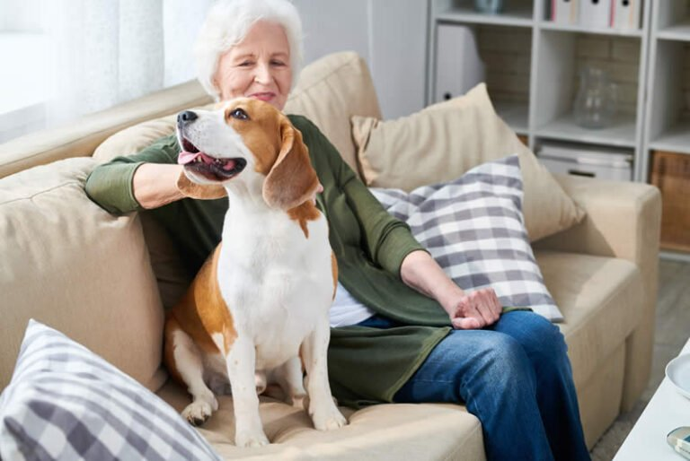 Pet Therapy with PALs Volunteers